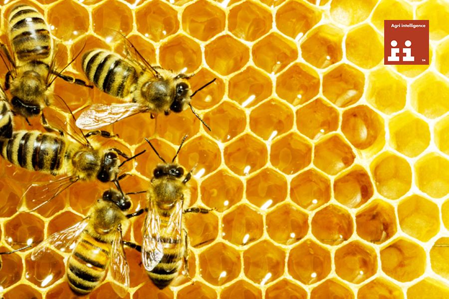 Sprijinul sectorului apicol, in atentia Comisiei Europene!