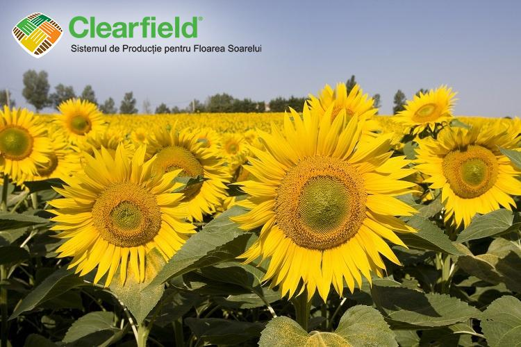 NK Neoma, hibridul de floarea-soarelui, cu performante dovedite an de an!