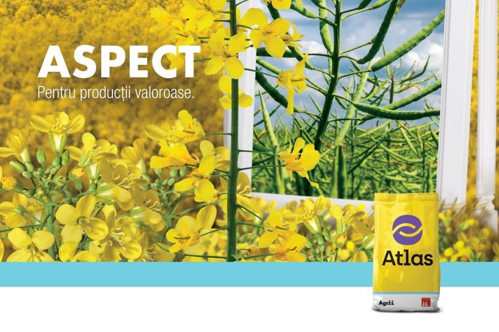 LG ASPECT, un hibrid de rapita, cu vigoare buna la pornirea in vegetatie