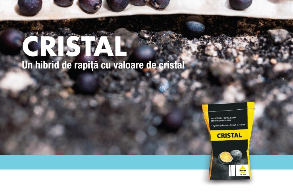 CRISTAL (RAPOOL), hibrid de rapita cu o valoare de...cristal!