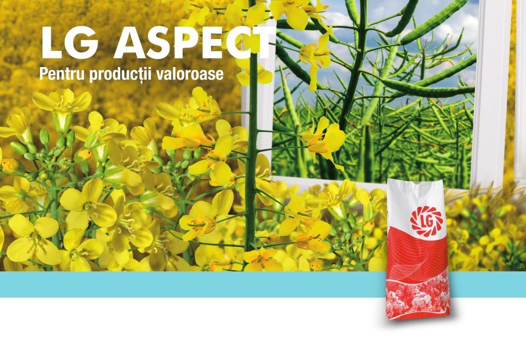 Hibridul de rapita LG ASPECT - ramificare puternica, potential de productie ridicat!