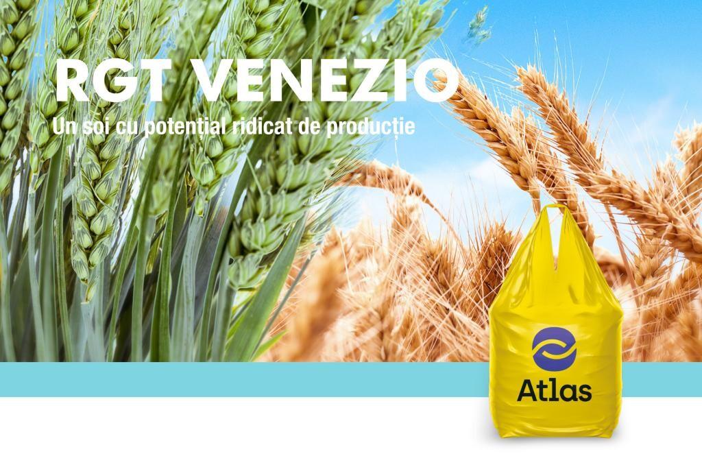 RGT VENEZIO, un soi de grau selectat pentru performanta fermei tale!
