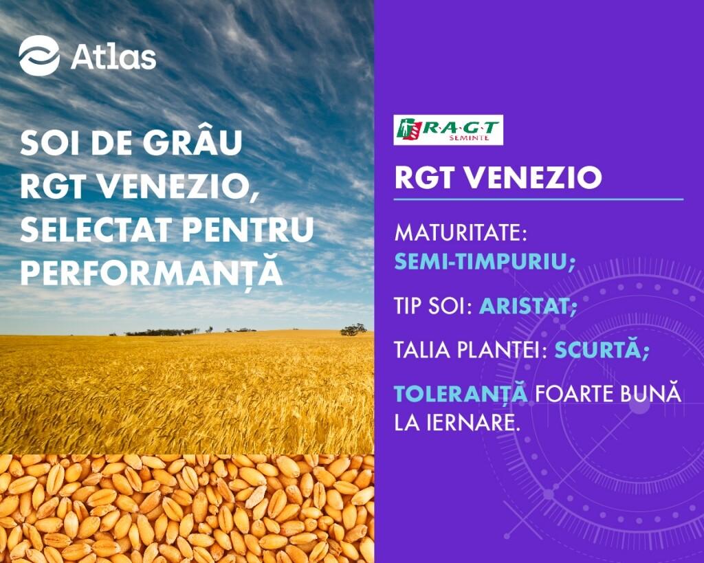 RGT VENEZIO, un soi de grau recomandat pentru productii ridicate!