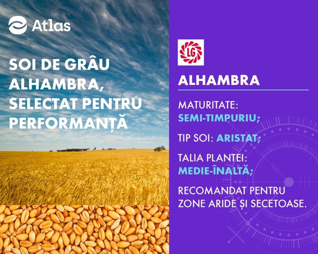 Oferta de sezon pentru soiul de grau ALHAMBRA