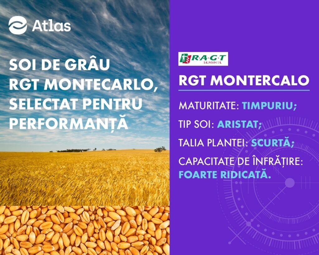 RGT MONTECARLO: productiv, timpuriu, cu un profil fitosanitar extraordinar!