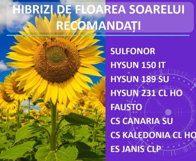 Alegeti hibrizii de floarea-soarelui din portofoliul de seminte Atlas!
