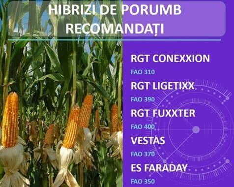De ce sa alegeti hibrizii de porumb din reteaua Agrii Romania?